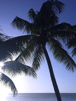 Photograph - Palm Tree Silhouette By The Ocean by John Colley