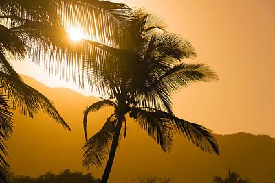 Giuseppe Cristiano - Palm Tree Silhouettes by Jess Kraft