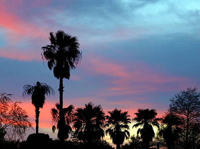 Photograph - Palm Tree Sunset by James Granberry