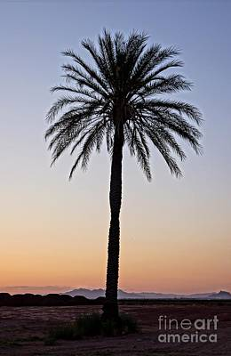Photograph - Palm Tree Sunset by Kerri Mortenson