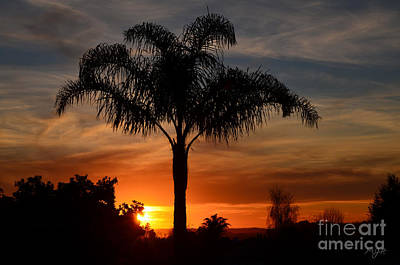 Photograph - Palm Tree Sunset by Mathias