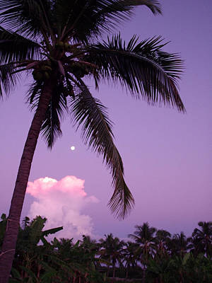 Palm Tree With Moon Art Print by Marianne Miles