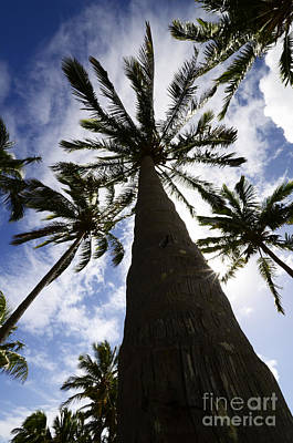 Photograph - Palm Trees 1 by Bob Christopher