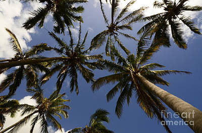 Photograph - Palm Trees 3 by Bob Christopher