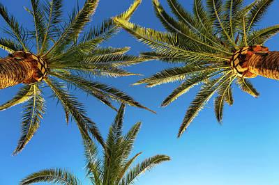 Palm Trees Against A Blue Sky Art Print by Wladimir Bulgar