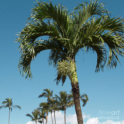 Palm Trees And Blue Sky Art Print by Sharon Mau