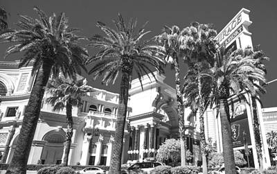 Photograph - Palm Trees And Las Vegas by Susan Stone