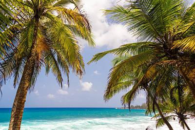 Palm Trees And Seascape Art Print by Jess Kraft