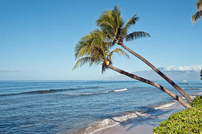 Photograph - Palm Trees And The Ocean Beach by Marek Poplawski