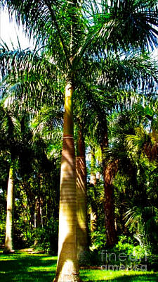 Photograph - Palm Trees by Anita Lewis