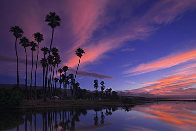 Photograph - Palm Trees At Dawn  Mg_6829 by David Orias