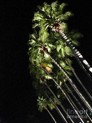 Palm Trees At Night Art Print by Gayle Melges