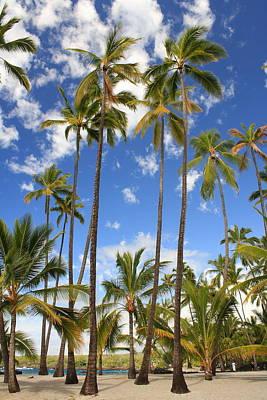 Photograph - Palm Trees At Pu'uhonua O Honaunau Nhp by Scott Rackers