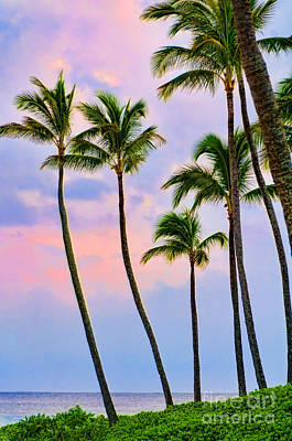 Photograph - Palm Trees At Sunset by Don Landwehrle