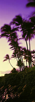 Palm Trees At Sunset, Oahu, Hawaii, Usa Print by Panoramic Images