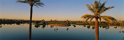 Palm Trees At The Lakeside, Phoenix Print by Panoramic Images