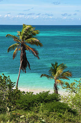 Antilles Photograph - Palm Trees By Ocean, Rodgers Beach by Alberto Biscaro