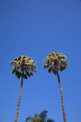 Photograph - Palm Trees by Frank Romeo