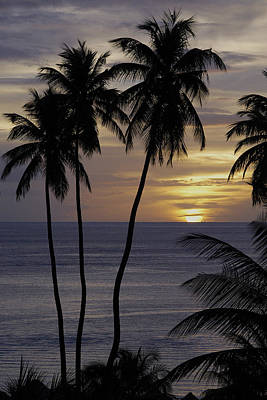 Photograph - Palm Trees In A St Lucian Sunset by John Colley