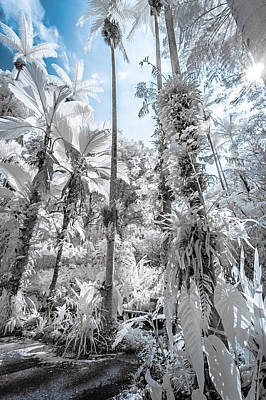 Photograph - Palm Trees In Infrared by Jason Chu