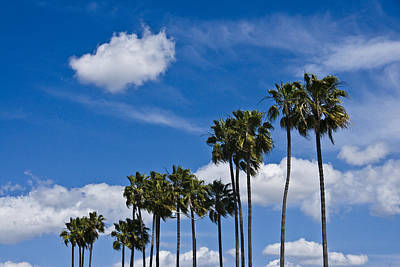 Palm Trees In San Diego California No. 1661 Art Print by Randall Nyhof