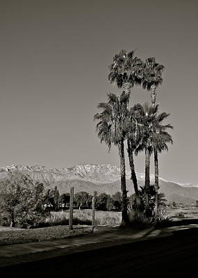 Photograph - Palm Trees In The Desert by Kirsten Giving