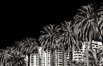 Palm Trees In Vina Del Mar Art Print by John Rizzuto