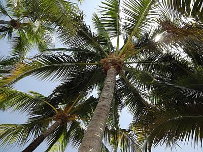 Photograph - Palm Trees by Jeanne Donnelly