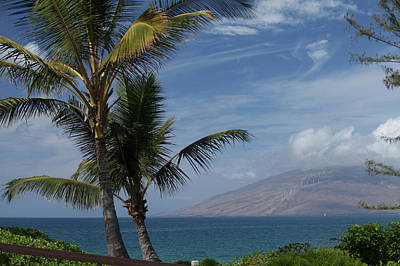 Kalamata Photograph - Palm Trees Near Kalama Beach Park, West by Peter French