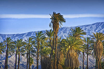 Animal Watercolors Juan Bosco - Palm Trees near Palm Springs California No. 1373 by Randall Nyhof