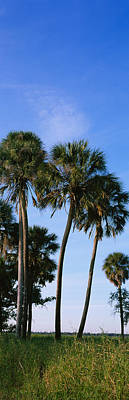 Palm Trees On A Landscape, Myakka River Art Print by Panoramic Images
