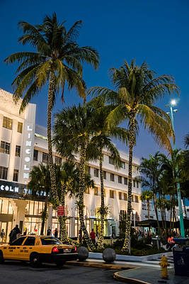 Photograph - Palm Trees On Lincoln Road by Alan Marlowe