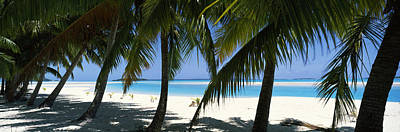 Palm Trees On The Beach, Aitutaki, Cook Art Print by Panoramic Images