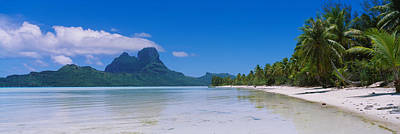 Boras Photograph - Palm Trees On The Beach, Bora Bora by Panoramic Images