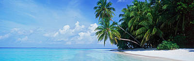 Palm Trees On The Beach, Fihalhohi Art Print by Panoramic Images