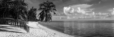 Beach Nobody Photograph - Palm Trees On The Beach, Matira Beach by Panoramic Images
