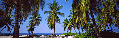 Palm Trees On The Beach, Puuhonua O Print by Panoramic Images