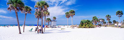 Gulf Images Photograph - Palm Trees On The Beach, Siesta Key by Panoramic Images