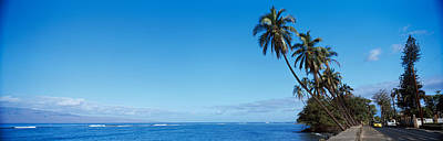 Urban Scenes Photograph - Palm Trees On The Coast, Lahaina, Maui by Panoramic Images