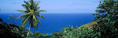 Trinidad And Tobago Wall Art - Photograph - Palm Trees On The Coast, Tobago by Panoramic Images