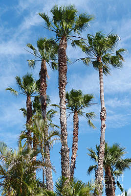 Photograph - Palm Trees by Phil Banks