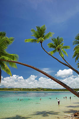 Palm Trees, Shangri-la Fijian Resort Print by David Wall