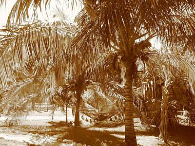 Photograph - Palm Trees  by Stephanie  Kriza