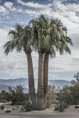 Digital Art - Palm Triplets by Photographic Art by Russel Ray Photos