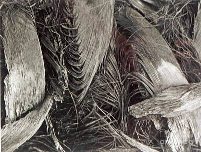 Photograph - Palm Trunk by Patricia  Tierney
