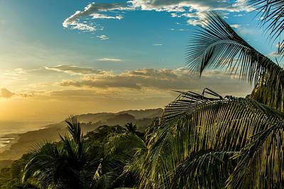 Photograph - Palm Vista by Matt Nordstrom
