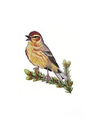 Palm Warbler Setophaga Palmarum Art Print