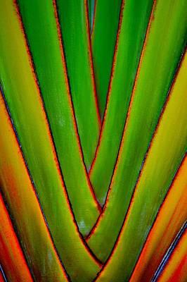 Palm Weave Grande Art Print