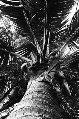 Photograph - Palm by William Wetmore