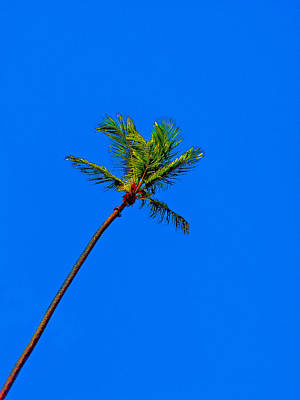 Palma. Original by Andy Za